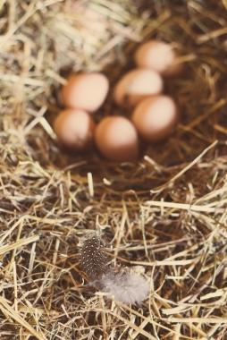 fossil photography-guinea egg-2