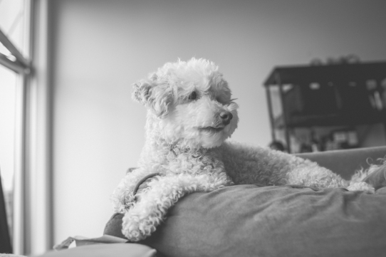 fossilphotography-Charlie-10